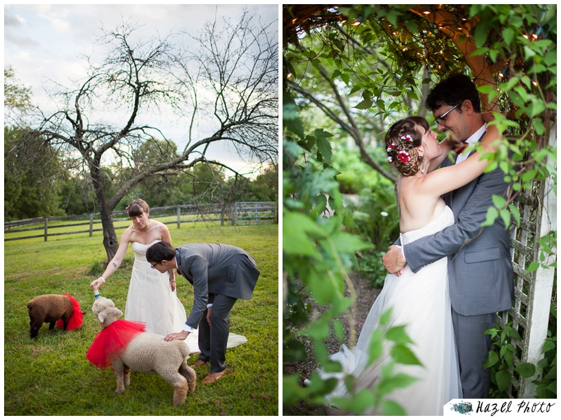 bride and groom feeding a southdown sheep from a bottle at their pennsylvania farm wedding